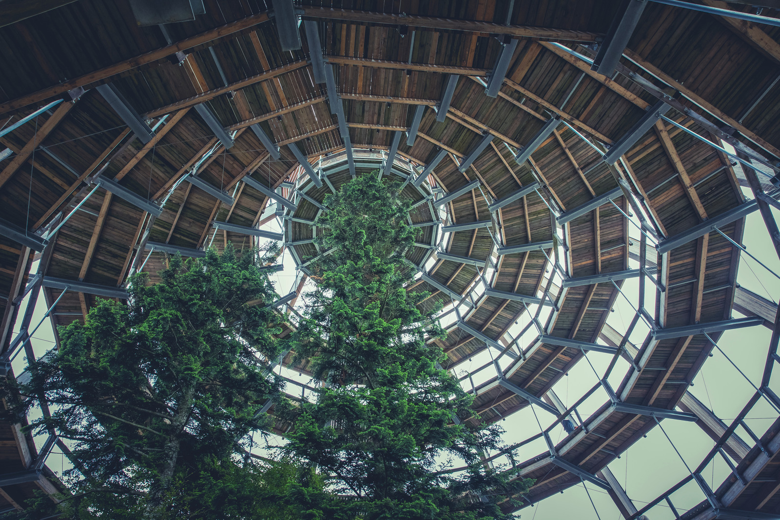 Canva – Brown Wooden Spiral Dome Building With Green Tree (1)